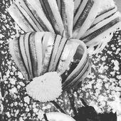 CATHERINE ANDRÉ Instagram