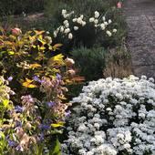 Garden ...Spring...Blossom...Hope