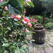 Des jours entiers dans mon jardin